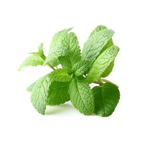 TFA Peppermint - Steam E-Juice | The Steamery